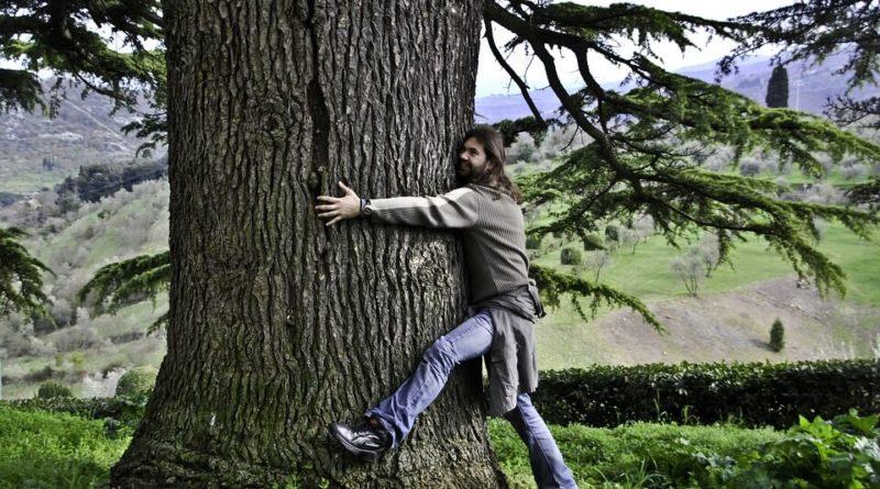drzewoterapia