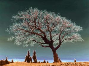 energia drzew
