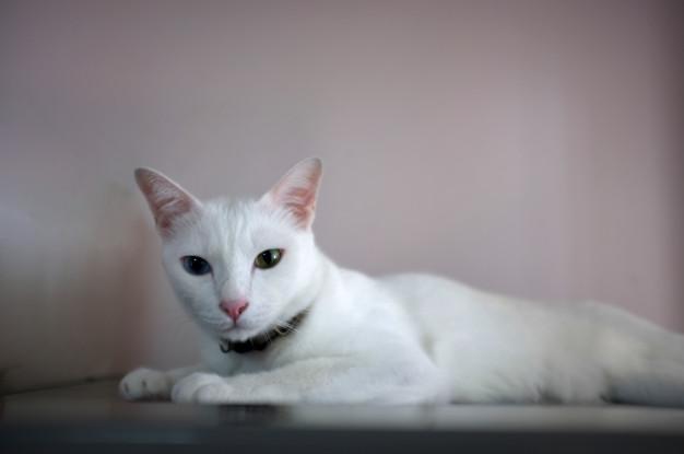 znaczenie białego kota